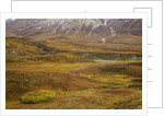 Fall colors on the tundra in Denali National Park by Corbis
