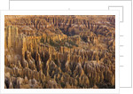 Hoodoos in Bryce Canyon National Park by Corbis
