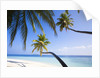Coconut palm trees shading the beach and lagoon by Corbis