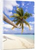 Coconut palm tree by the beach and lagoon by Corbis