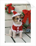 Dog Dressed Up as Santa Claus by Corbis