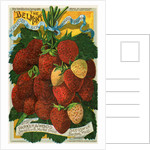 Seed catalog illustration with strawberries by Corbis