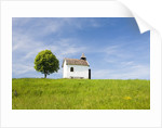 Lime tree and tiny white chapel in rural meadow by Corbis