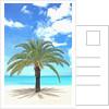 Palm tree on tropical beach by Corbis