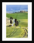 Corn fields and cypress trees in Pienza countryside by Corbis