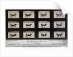 The Horse in Motion by Eadweard Muybridge