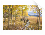 Wooden fence and Aspen forest in autumn by Corbis