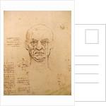 Drawing of facial study by Leonardo da Vinci