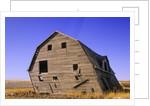 Abandoned Farm Buildings, Canadian Prairies, Canada by Corbis