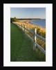 Caribou-Munroes Island Prov Park Nova Scotia, Canada. by Corbis