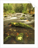 A Stream Flows Through the Rainforest at Goldstream Provincial Park Near Victoria, British Columbia, Canada. by Corbis