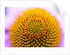 Closeup of a flower by Corbis