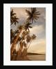 Coconut Grove, Molokai, Hawaii by Corbis