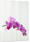 Purple orchids by Corbis