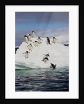 Adelie Penguins on ice pack just off of Paulet Island by Corbis