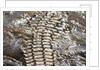 Back of Nile Crocodile in Mara River by Corbis