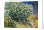 Lilac Bush by Vincent Van Gogh