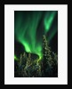 Aurora Borealis or Northern Lights, Yukon. by Corbis