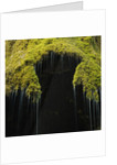 A moss covered waterfall in the Bavarian Allg?u by Corbis