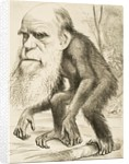 Caricature of Charles Darwin by Corbis