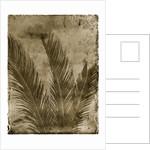 Sago Palm by Corbis