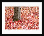 Pile of autumn leaves around tree trunk by Corbis