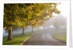 Misty autumn trees by Corbis