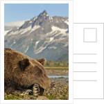Brown Bear and Coastal Mountains, Katmai National Park, Alaska by Corbis