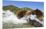 Fishing Brown Bear, Katmai National Park, Alaska by Corbis