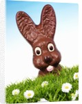 Chocolate Easter Bunny in Easter grass by Corbis