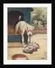 Illustration of dog looking at another dog holding bone by Corbis