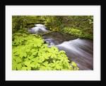 still creek, Mt. Hood National Forest. Oregon Cascade Mountains. by Corbis