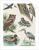 Variety of birds by Corbis