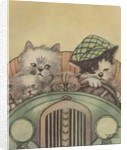 Cat family driving in car by Corbis