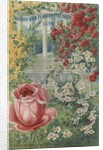 Illustration of roses by Corbis