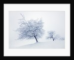 Winter landscape with snow covered fruit trees by Corbis