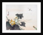 Dragonfly and a Pumpkin Blossom by Ogata Gekko