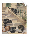 Four cats drinking milk from spilled bottle on stoop by Corbis