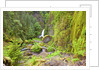 Tanner Creek Falls, Columbia River Gorge National Scenic Ates, Oregon by Corbis