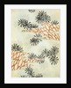 Woodblock print of pine needles and branches by Corbis