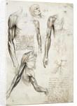 Study of a dead man by Leonardo da Vinci