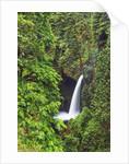 Waterfall Metlako Falls in Pacific rainforest by Corbis