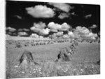 1950s farm scene with stacks of harvested wheat sky with puffy clouds by Corbis