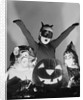 1950s 3 children in costumes around a carved pumpkin jack-o-lantern by Corbis