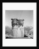 1950s two duroc pigs piglets in a nail keg barrel farm barn in background pork barrel cute by Corbis