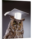 1990s wise old owl wearing white mortarboard graduation cap by Corbis
