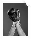 1950s gloved hand of winner of boxing match being held up by referee by Corbis