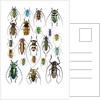Long Horned beetles Top view by Corbis