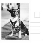 Portrait of dressed- up dog by Corbis