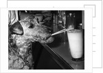 Dog drinking with straw by Corbis